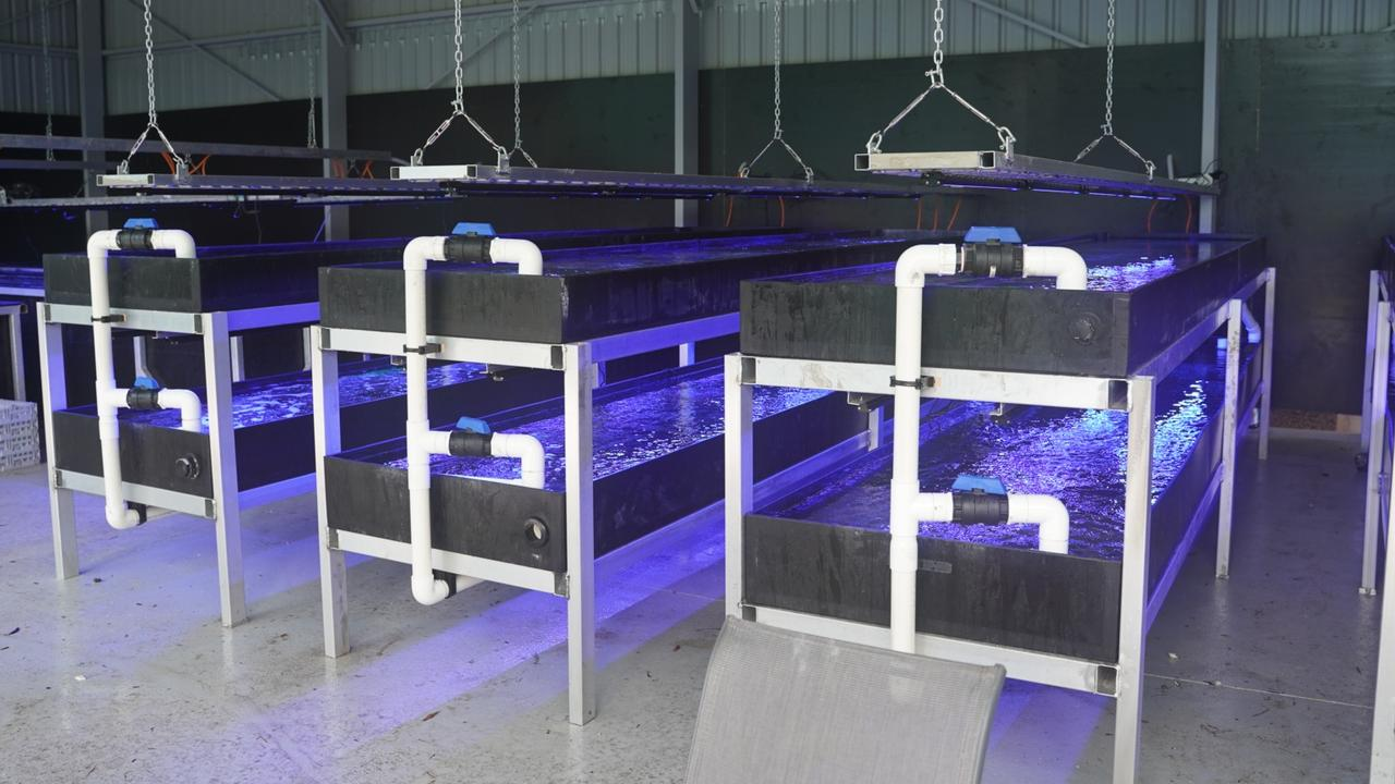 Coral growing in tanks under LED light. Picture: supplied