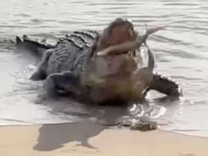 New warning issued in wake of viral crocodile video