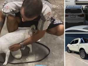 Pet detectives solve stolen car and dog mystery