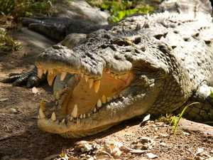 'There's a threat': Experts explain spike in croc encounters