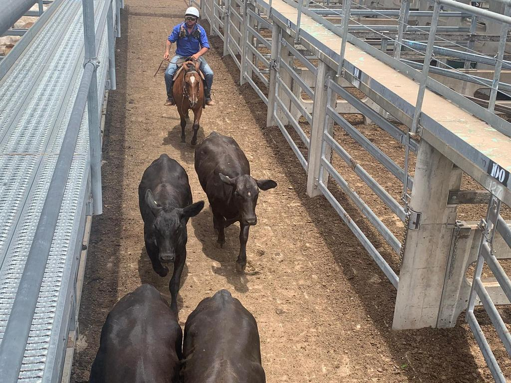 CQLX Maintenance Manager Matty Carr is looking forward to the upcoming February All Breeds Sale, which is held from Monday 15 to Tuesday 16 at CQLX.