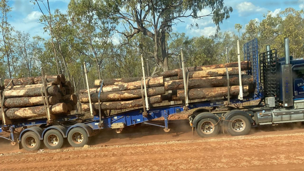 The wholesale clearing of sacred ironwood trees in Lakefield National Park is being investigated after the decimation of 8000 of the species.