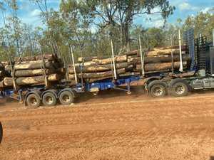 'The trees were sacred': Ironbark felling causes clan rift
