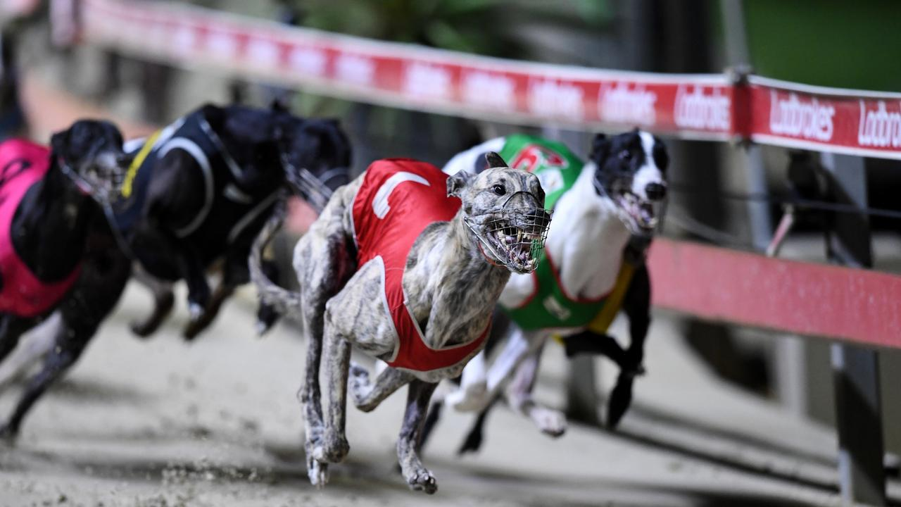 "A new report claims to reveal the ""true picture of greyhound racing in Australia"". Digital Image Grant Troville © NRL Photos."