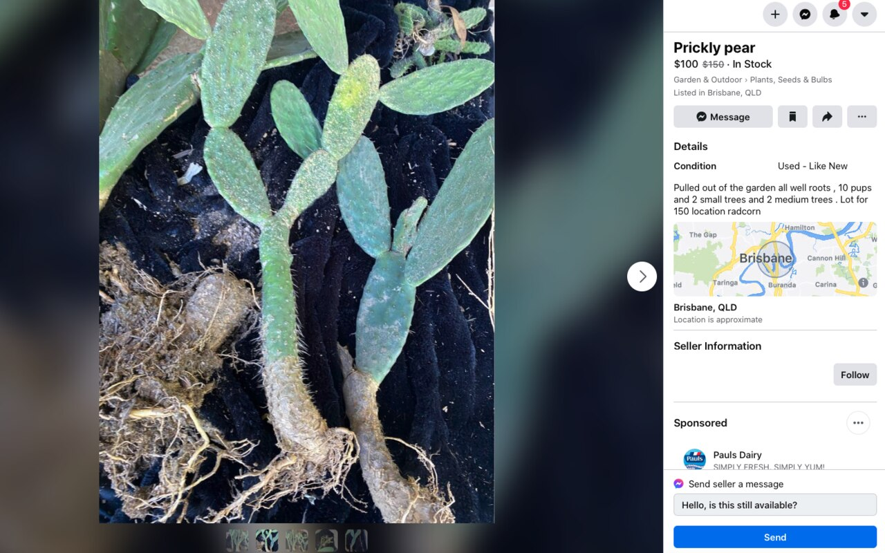 An online listing for Prickly Pear cactus – which is a banned and potentially dangerous plant. Picture: supplied
