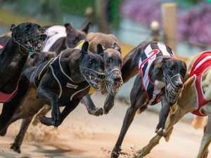 Thought greyhound racing was bad, 'check out kids' sport'