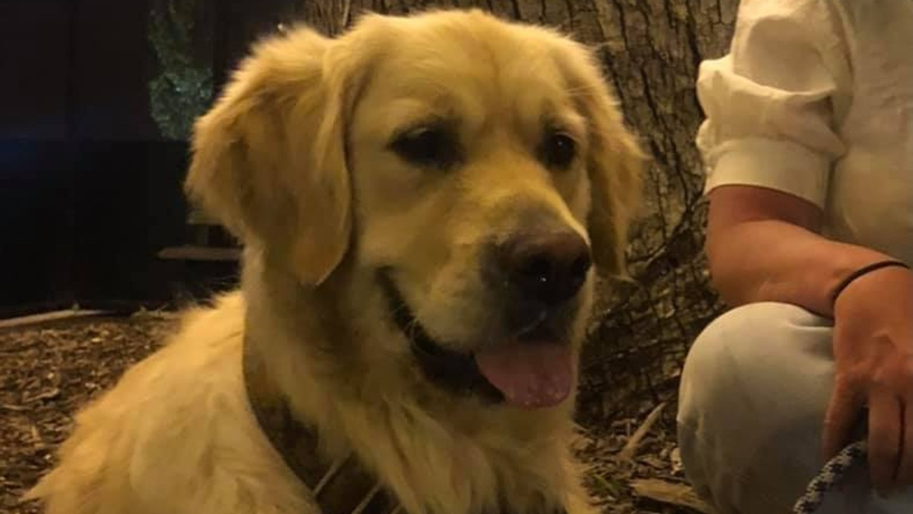 Police believe a beloved pet dog who vanished from a home was stolen by an intruder in the middle of the night.