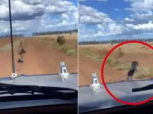 Police identify alleged offender who ran down an emu