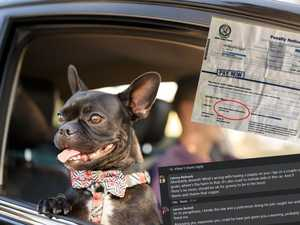 'F***ing joke': Dog-driver cops roasting after posting fine
