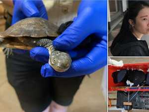 Exotic animal bust: Asphyxiated reptiles in stockings, plastic