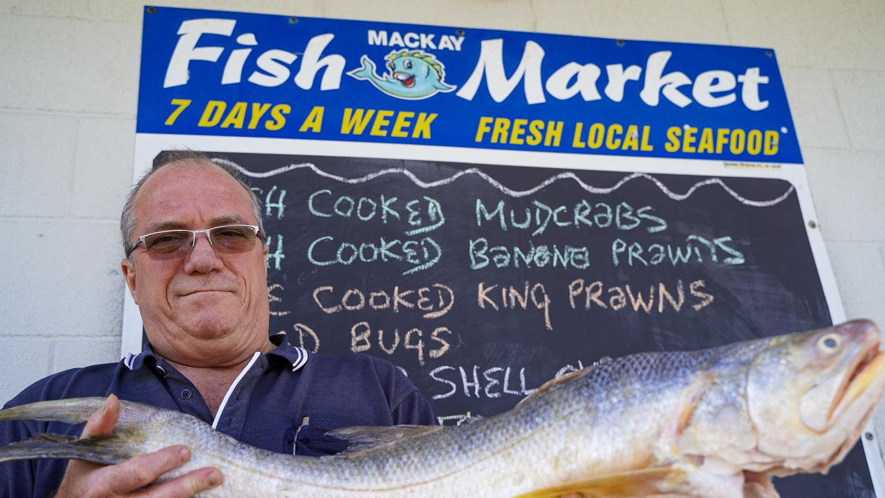 Mackay Fish Market owner David Caracciolo with a gold threadfin, also known as a King Salmon. Picture: Heidi Petith