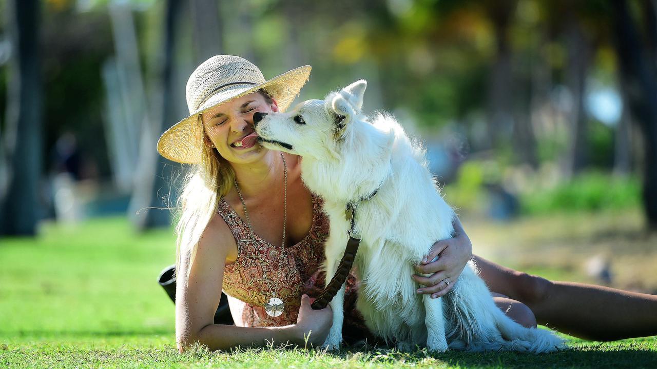 Queenslanders like Brittany Chapman and pet border collie Django have been feeling the heat.
