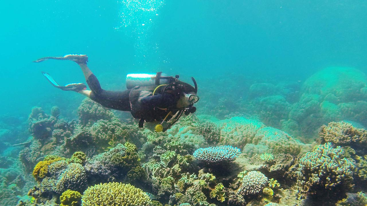 A scuba diver swimming among coral on the Great Barrier Reef. Picture: Brendan Radke.
