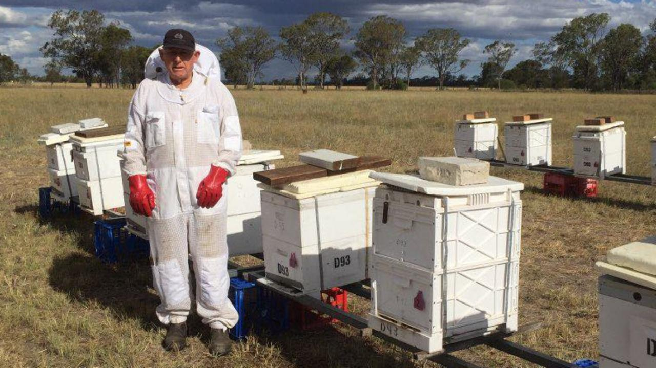 DEVASTATING LOSSES: Dalby resident Peter Donohue witnessed millions of his bees die allegedly by an insecticide chemical called Fipronil. Picture: Contributed