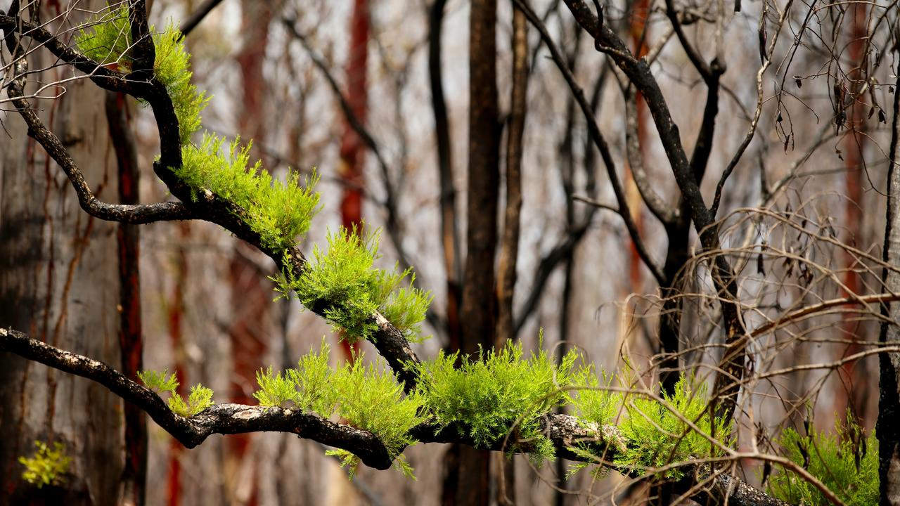 There are signs of recovery after the 2019 bushfires. Photo: Nathan Edwards