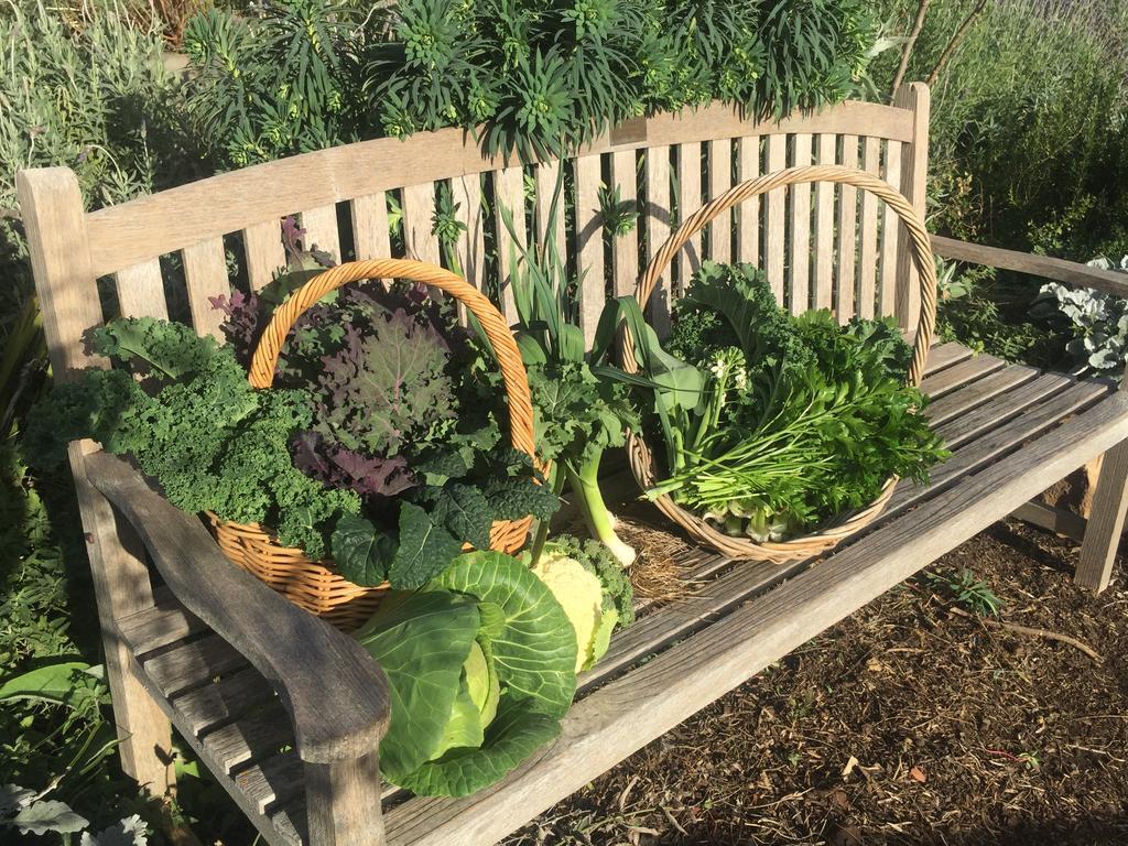 The winter vegie harvest. Picture: Sophie Thomson