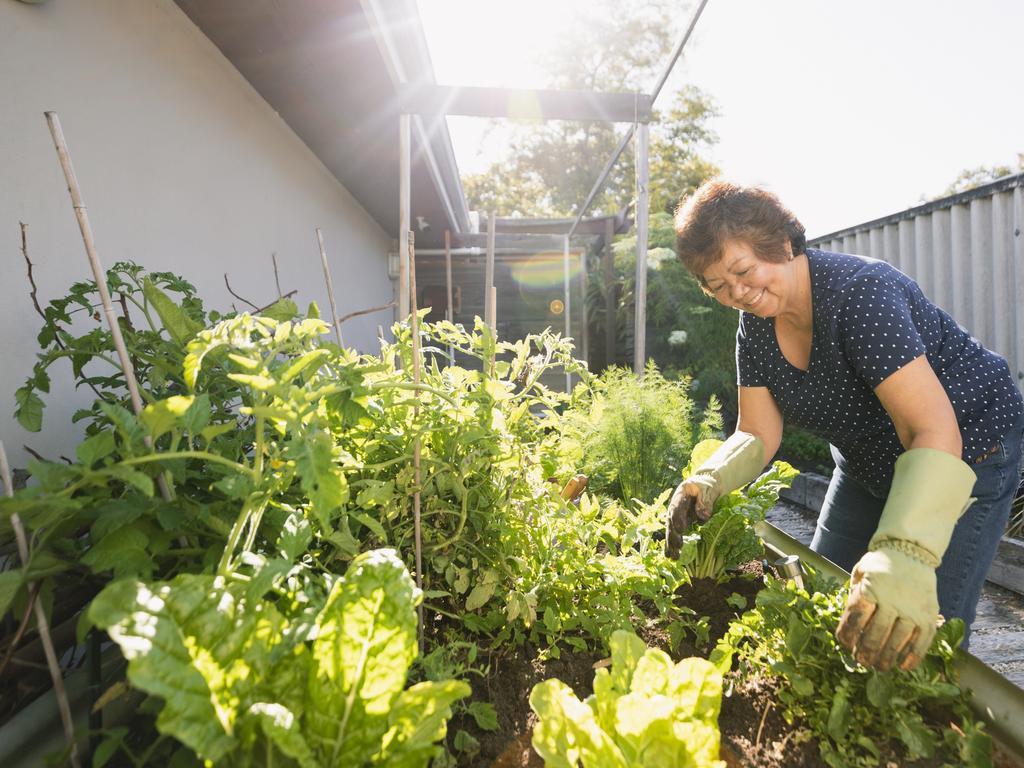The right amount of light will make or break your vegie garden.