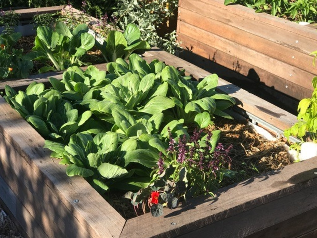 Raised garden beds are one option to consider. Picture: Sophie Thomson
