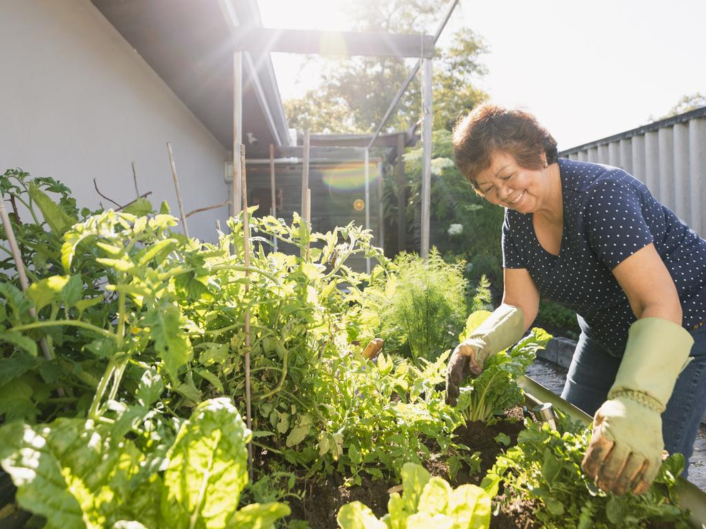 Gardening advice: How to grow your own vegie patch