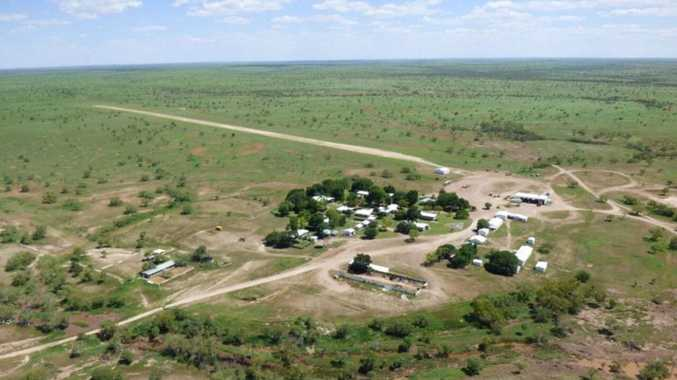 AFL boss has stake in NT cattle station