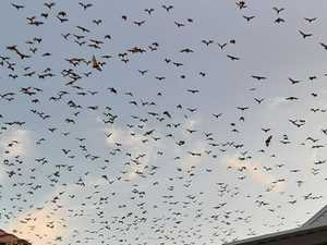 Coast residents go batty over skies