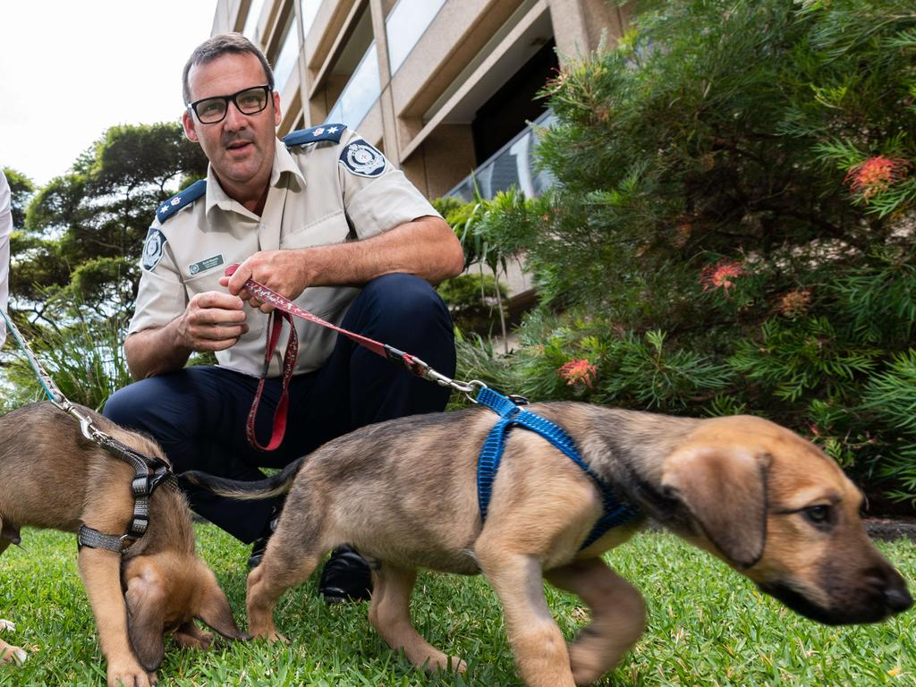 NSW RSPCA Chief Inspector Scott Meyers with rescue puppies Ivan and Charlie. Picture: NCA NewsWire / James Gourley