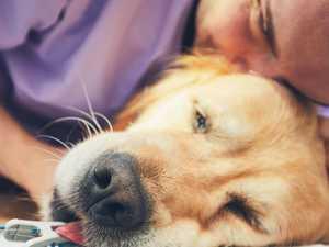 Dalby tops Queensland's animal cruelty hotspot list