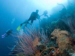 Reef campaigners decry decision to move CQ mine forward