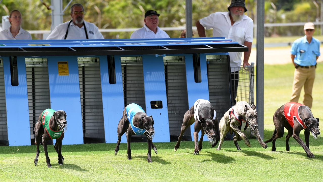 The start of race one at the Bundaberg Greyhound Racing Club.