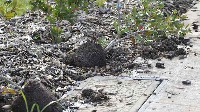 Vegetation vandals reach new lows