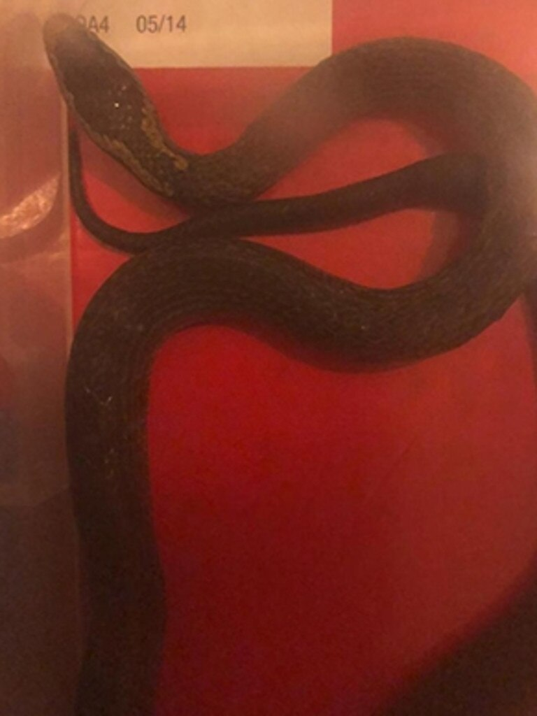 A close up of the snake. Source: supplied 2GB