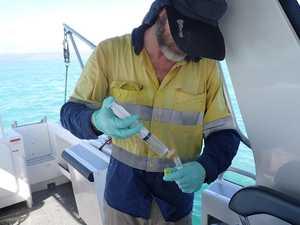 Funds solve 'data gap' in vital reef monitoring program
