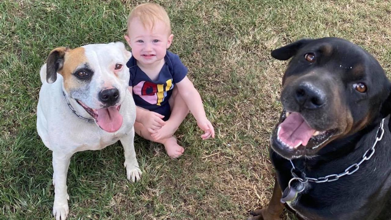 RATSAK ATTACK: A Darling Downs family have been left fearful for their child's life after discovering rat poison inside their Yarraman backyard. Mandee Hopkins was forced to call the vet after discovering her dog Pixel (right) had ingested several pellets of Ratsak on Monday afternoon. Her 10-month old son Declan had been playing in the yard only minutes earlier. Picture: Contributed