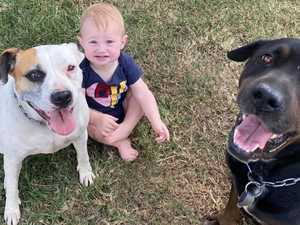 Family horrified to find dogs poisoned in their own backyard