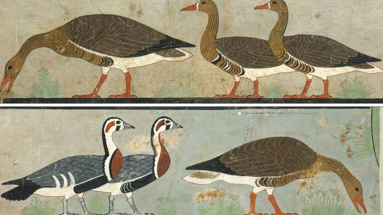 'Meidum Geese', Chapel of Itet, mastaba of Nefermaat and Itet (Dynasty 4), Medium, Egypt (Credit C.K. Wilkinson).
