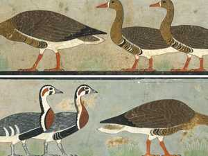 Local man uncovers secret in 4600-year-old painting