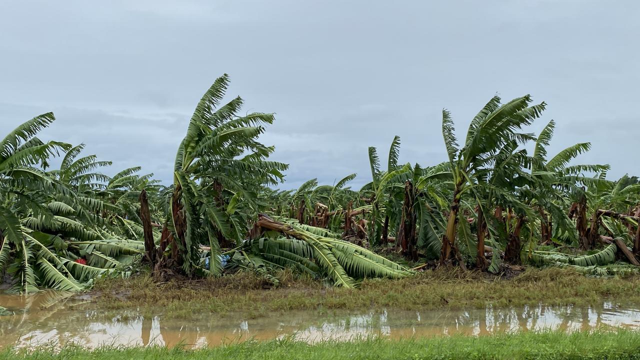 The Sciacca family's Pacific Coast Eco Bananas farm was flattened with gale force winds from Cyclone Nirin. Picture: pacific Coast Eco Bananas.