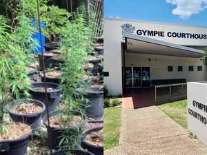 Gympie grandma continues crime streak with 14 weed plants