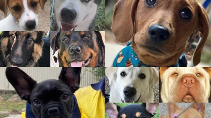 VOTE NOW: Which of these 50 dogs is Gympie's most loveable?