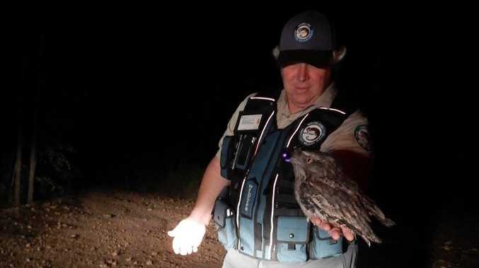 RELEASED: Seized birds set free near M'boro