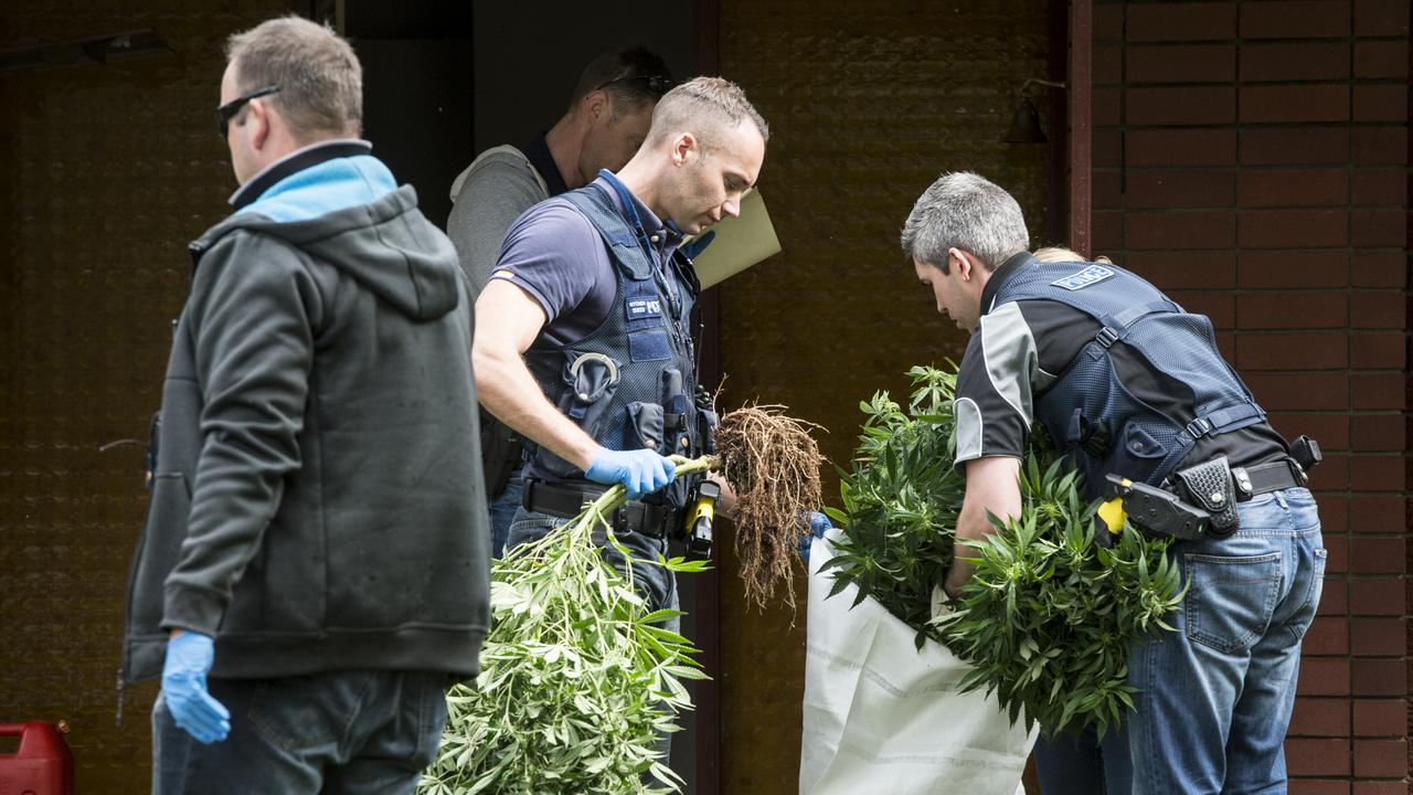 GENERIC PIC: Detectives from Armadale Police raid a house in Gosnells, where 94 cannabis plants were found.