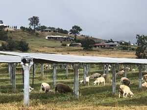 Future of farming under way at UQ solar farm