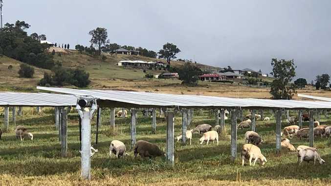 Future of farming under way at UQ solar farm