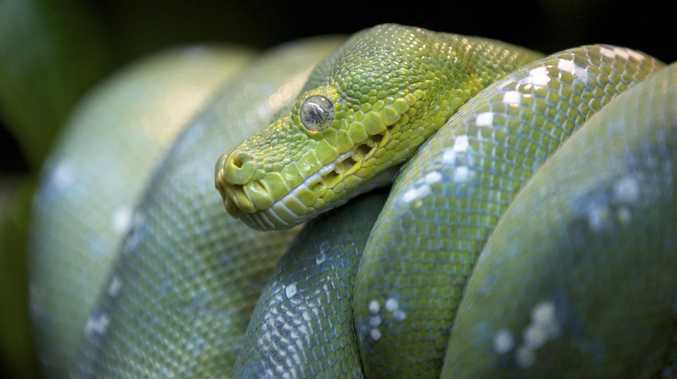 Woman hospitalised after being bitten by snake
