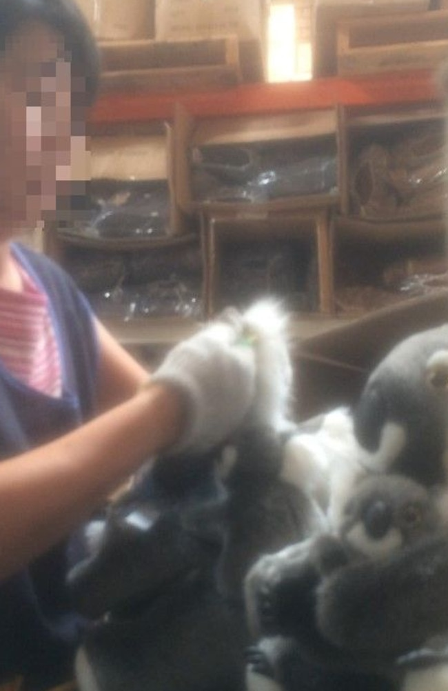 Chinese tags being removed from the koalas unloaded from a container from Shanghai, China. Picture: GJ.