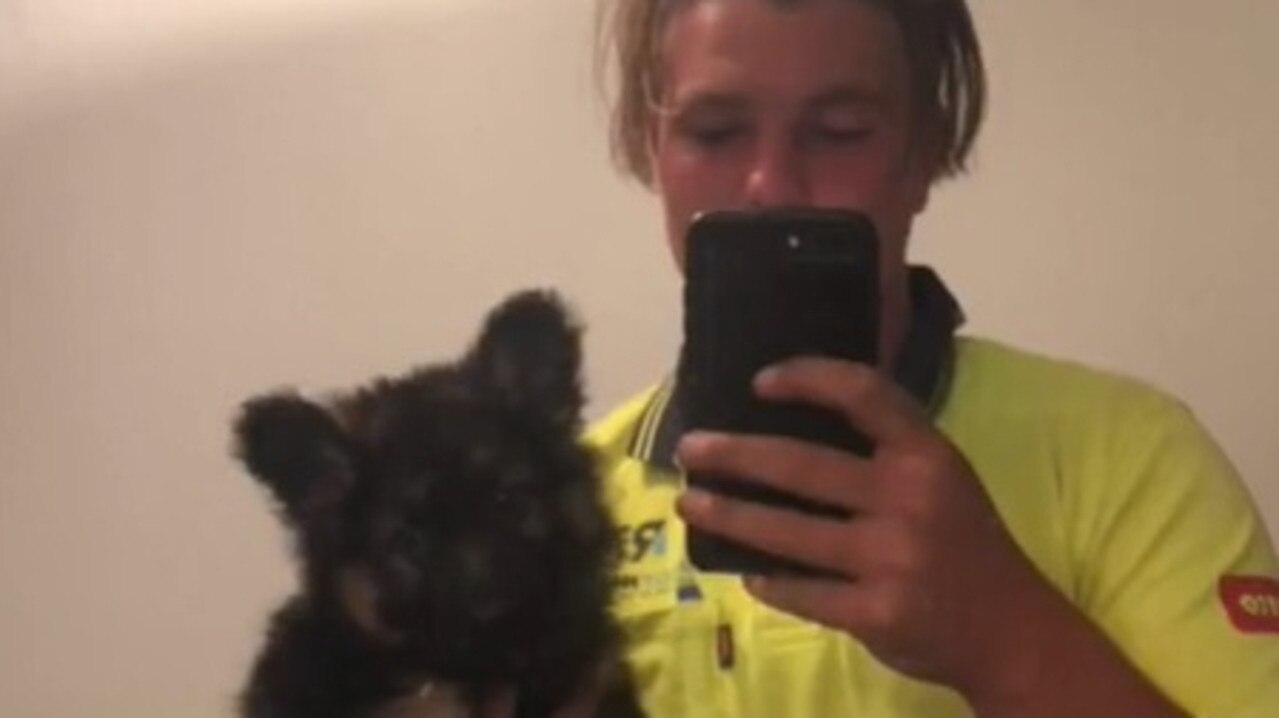 Gympie roofer Lochey Brown and his adorable dog Alf have gone viral on TikTok, with more than 300k views and counting.