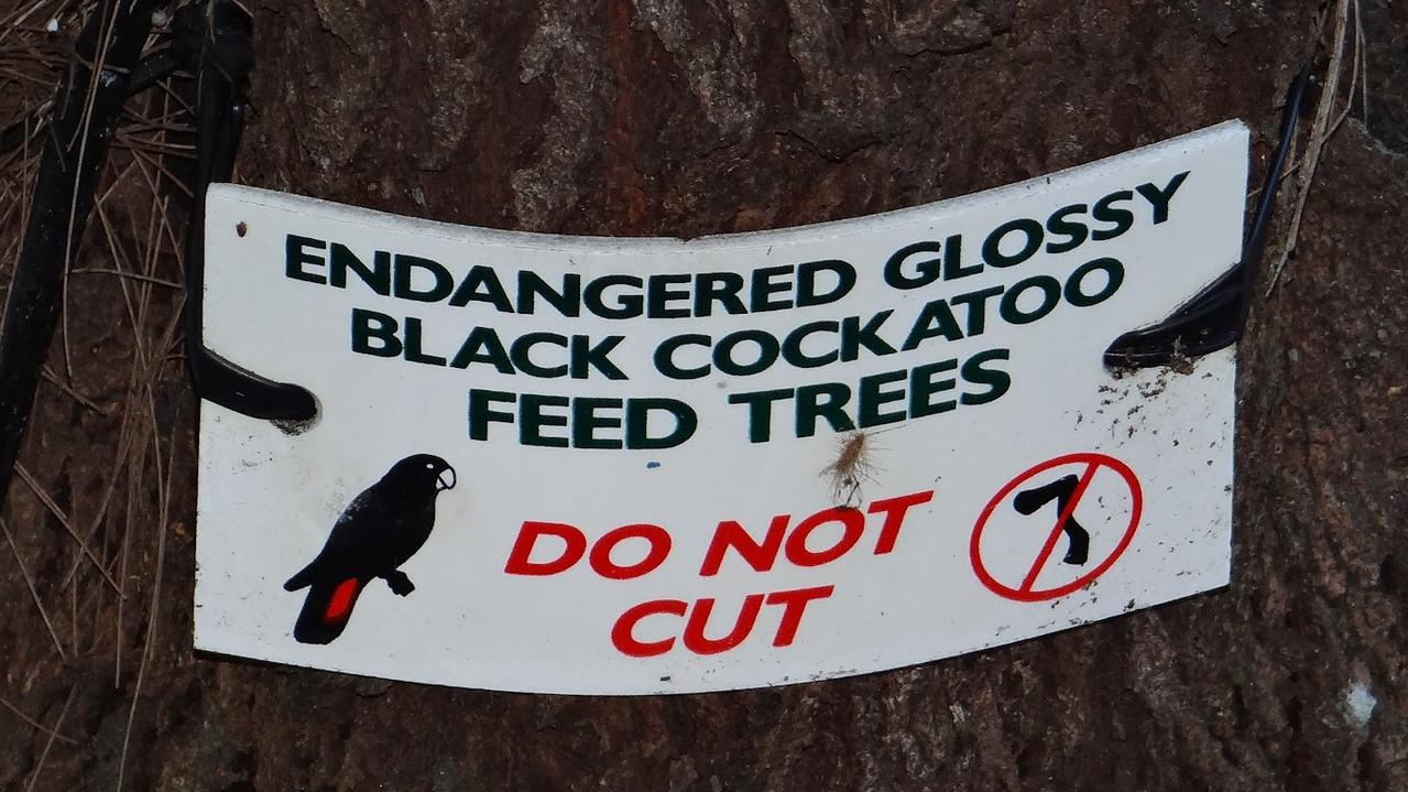 The sign placed on a glossy black cockatoo feed tree at Sunrise says it all.