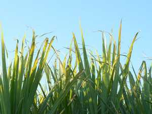 Funding helps secure hundreds of jobs in local sugar sector