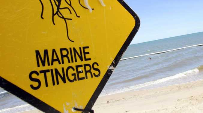 BREAKING: Two children stung by jellyfish off Mackay beach