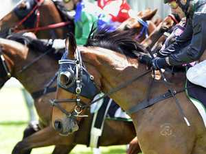 Capricornia Yearling Sales produce even more winners